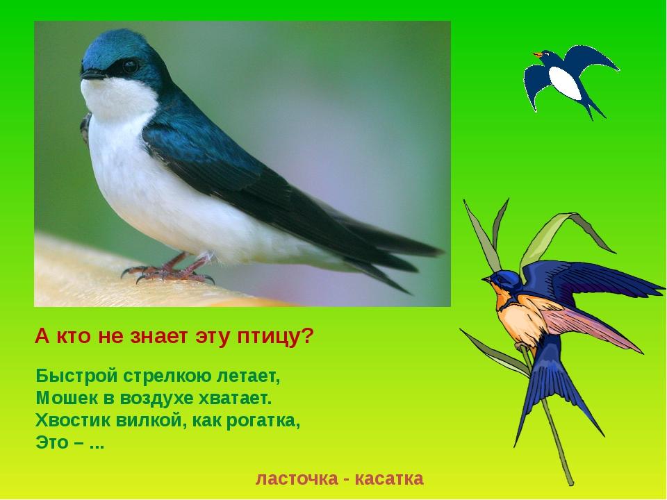 Ласточки прилетают позже других птиц. Время прилёта – май. Это полезнейшие пт...