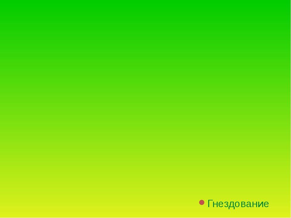 Красная книга Украины