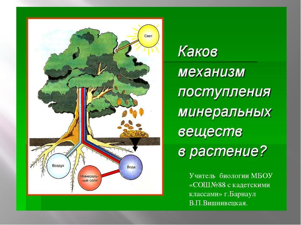 Учитель биологии МБОУ «СОШ№88 с кадетскими классами» г.Барнаул В.П.Вишнивецк...