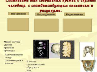 Соотнесите тип соединения костей в скелете человека с соответствующим описани