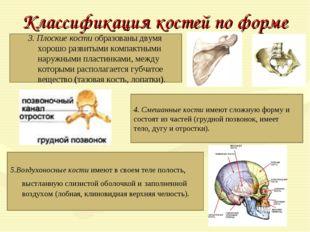 Классификация костей по форме 3. Плоские костиобразованы двумя хорошо развит
