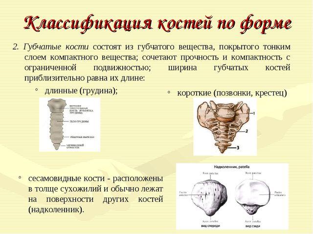 Классификация костей по форме 2. Губчатые кости состоят из губчатого вещества...