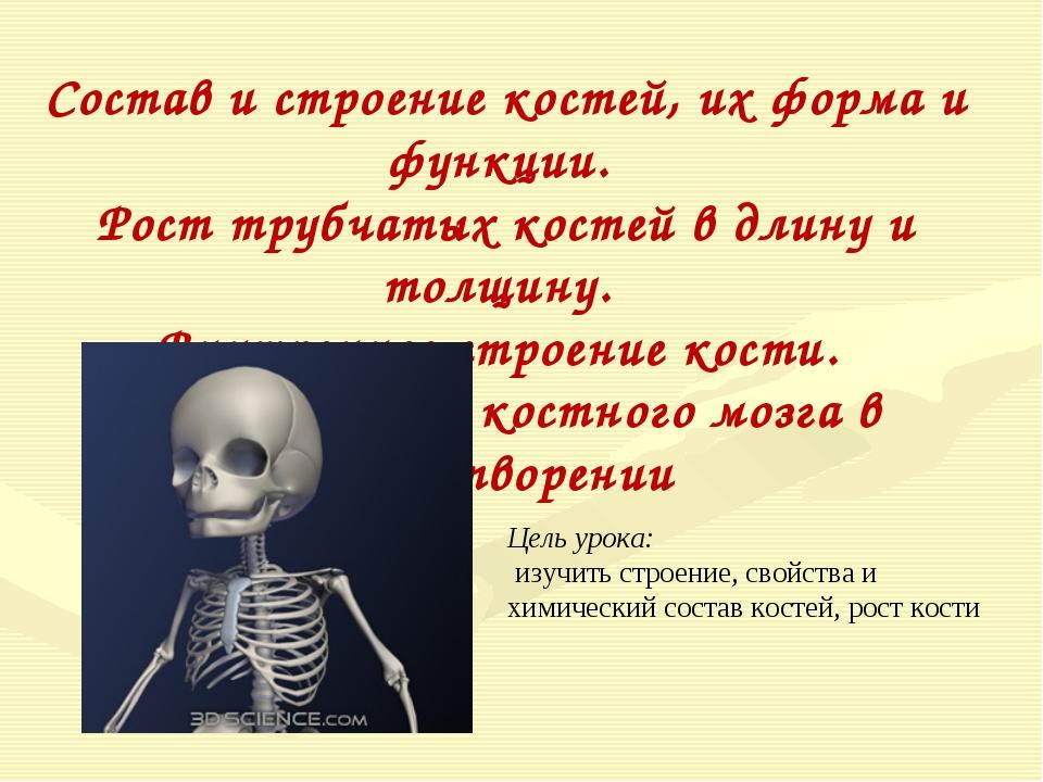 Состав и строение костей, их форма и функции. Рост трубчатых костей в длину и...
