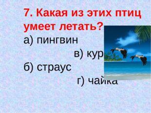 7. Какая из этих птиц умеет летать? а) пингвин в) курица б) страус г) чайка