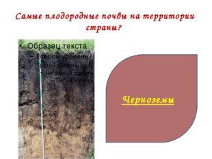 Самые плодородные почвы на территории страны? Черноземы