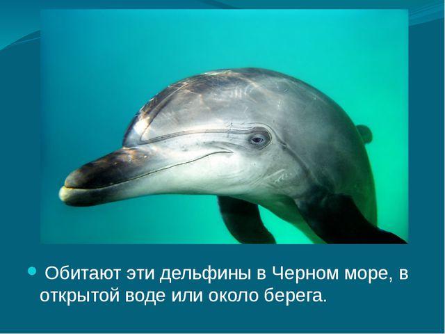 Обитают эти дельфины в Черном море, в открытой воде или около берега.