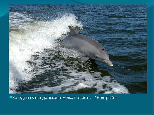 За одни сутки дельфин может съесть 16 кг рыбы.