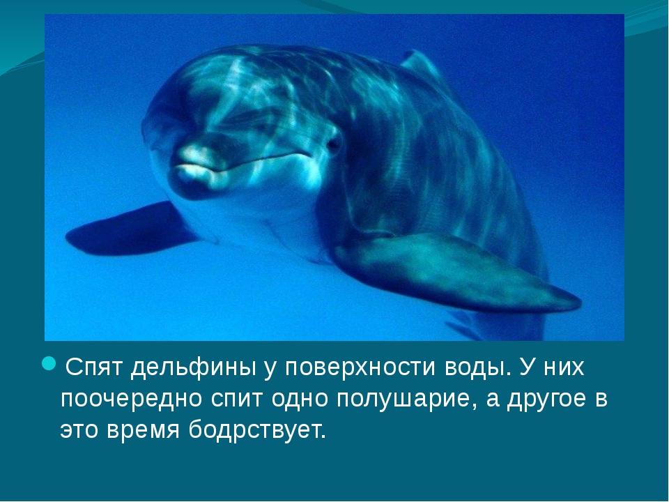 Спят дельфины у поверхности воды. У них поочередно спит одно полушарие, а дру...