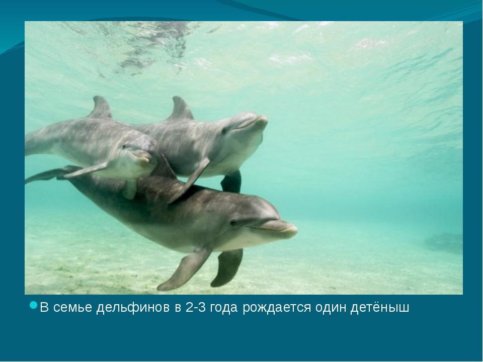 В семье дельфинов в 2-3 года рождается один детёныш