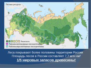 Леса покрывают более половины территории России Площадь лесов в России состав