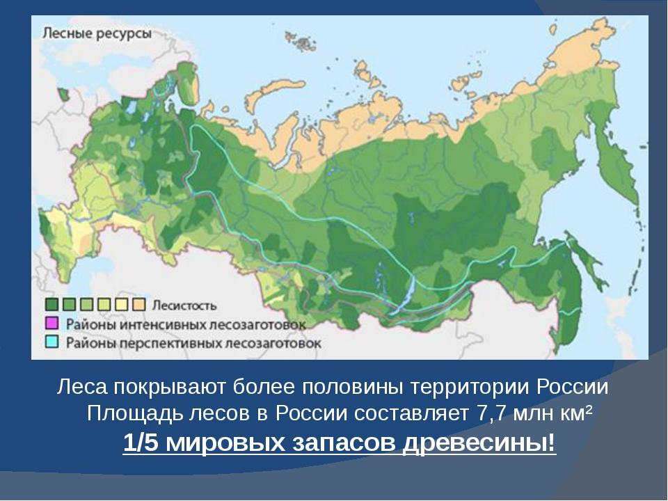 Леса покрывают более половины территории России Площадь лесов в России состав...