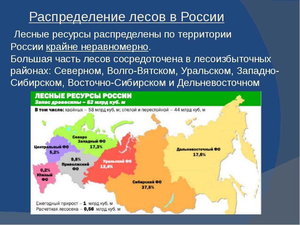 Распределение лесов в России Лесные ресурсы распределены по территории Росси...