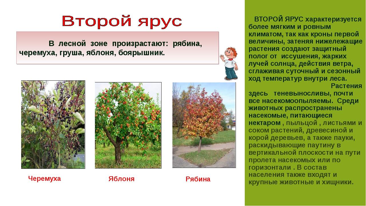 Схема, показывающая распределение ярусов в растительном сообществе