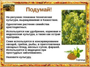 Подумай! На рисунках показана техническая культура, выращиваемая в Казахстане