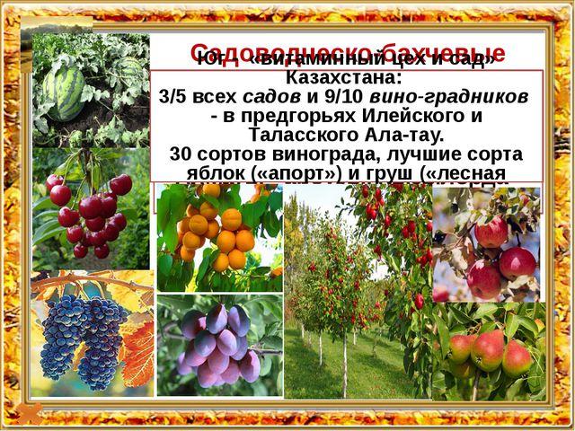 Title in here Title in here Садоводческо-бахчевые культуры Центральный и Сев...