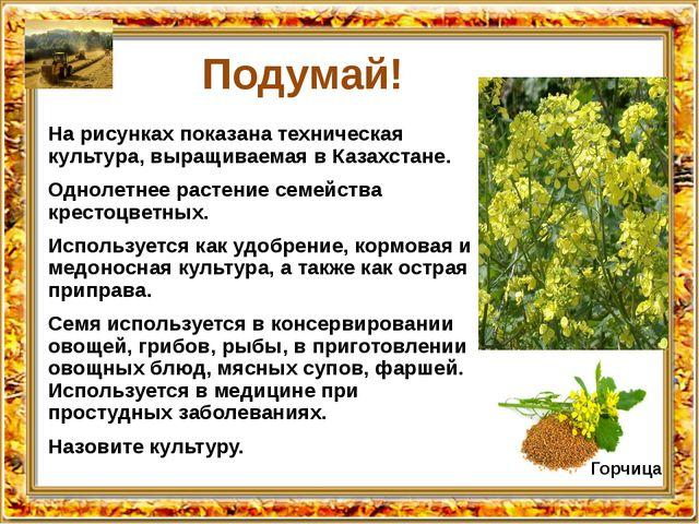 Подумай! На рисунках показана техническая культура, выращиваемая в Казахстане...