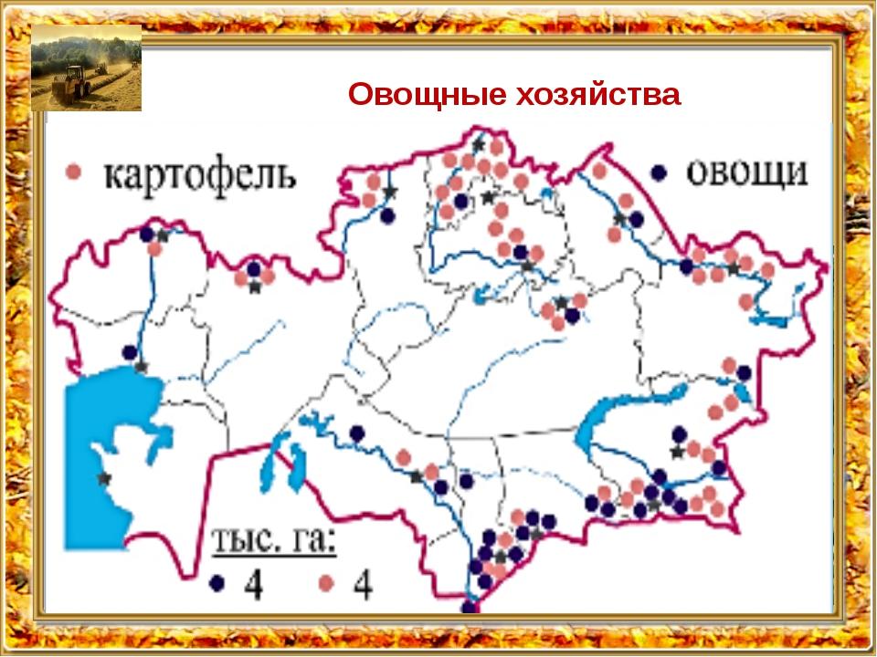 Овощные хозяйства сосредоточены в окрестностях Алматы, Караганды, Усть-Камено...