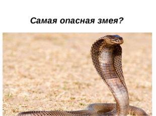 Самая опасная змея?