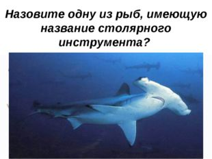 Назовите одну из рыб, имеющую название столярного инструмента?