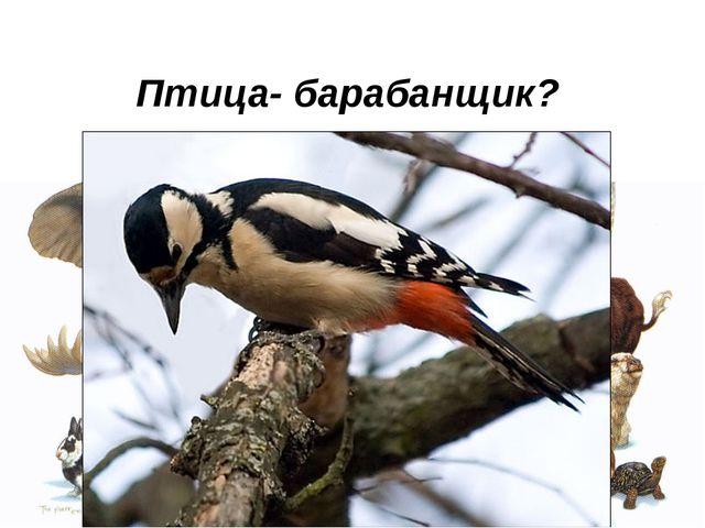 Птица- барабанщик?