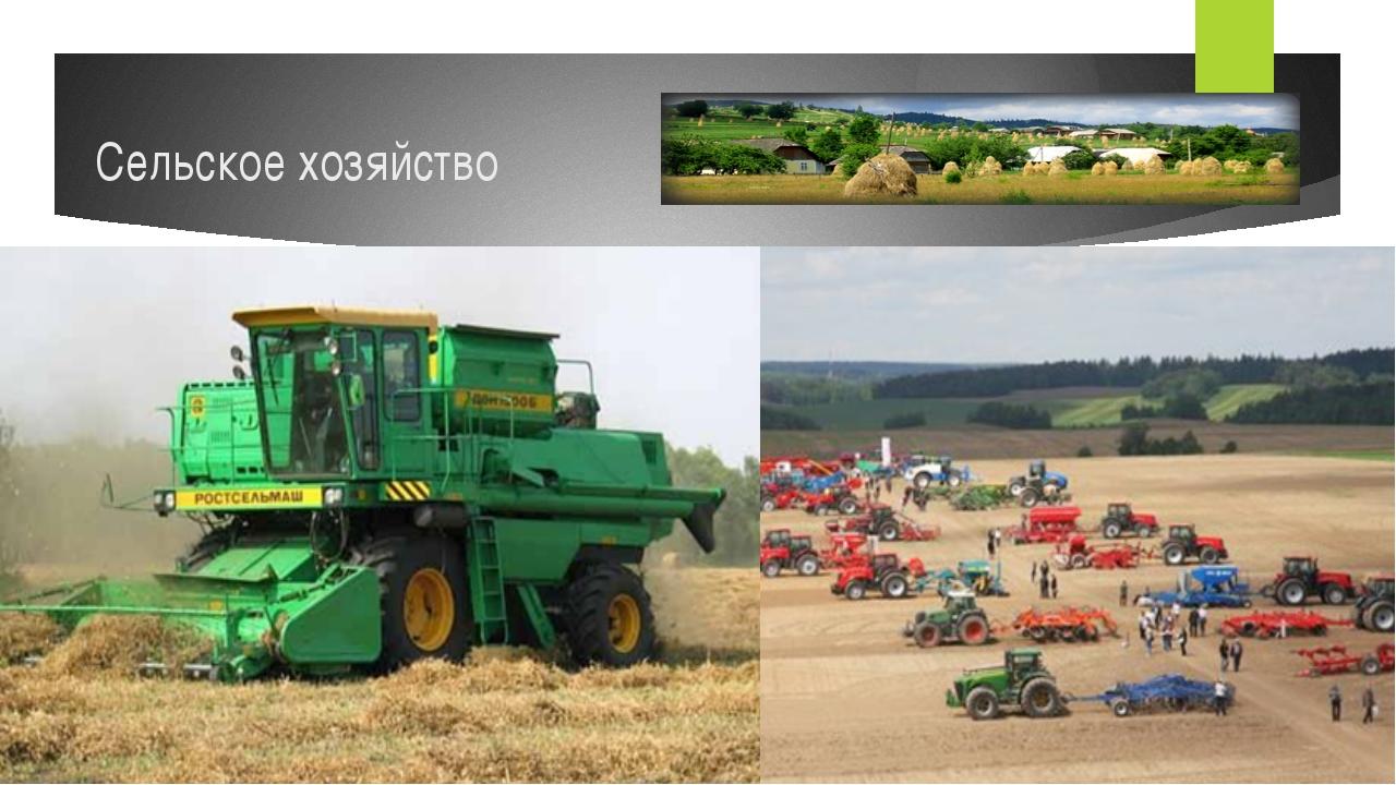 Большие территории страны используются для занятия сельским хозяйством. Несмо...