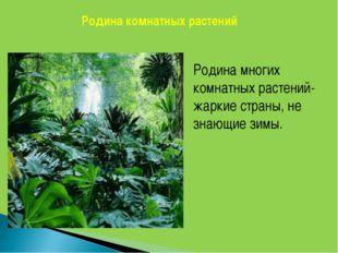 Родина комнатных растений Родина многих комнатных растений- жаркие страны, не