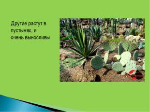 Другие растут в пустынях, и очень выносливы