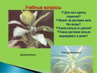 Учебные вопросы Для чего цветку горшочек? Может ли растение жить без воды? Ка
