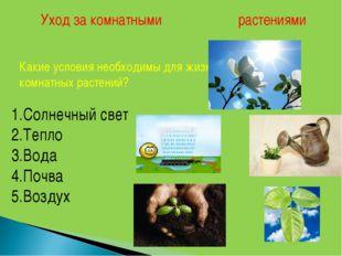 Уход за комнатными растениями Какие условия необходимы для жизни комнатных ра