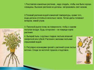 1.Расставляя комнатные растения , надо следить, чтобы они были хорошо освещен