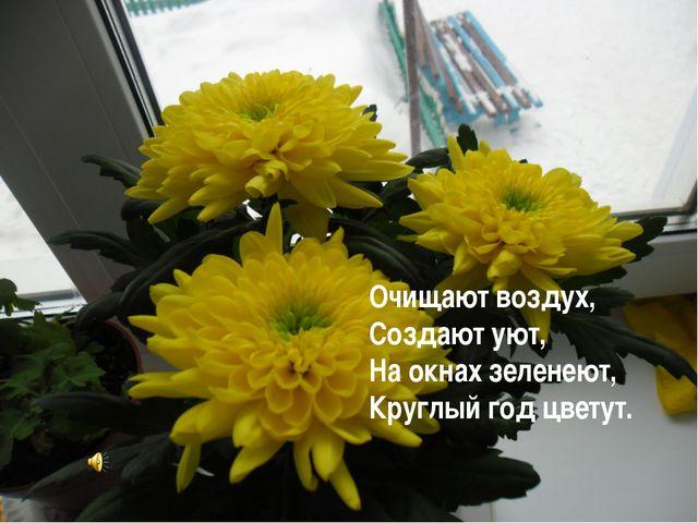 Очищают воздух, Создают уют, На окнах зеленеют, Круглый год цветут.