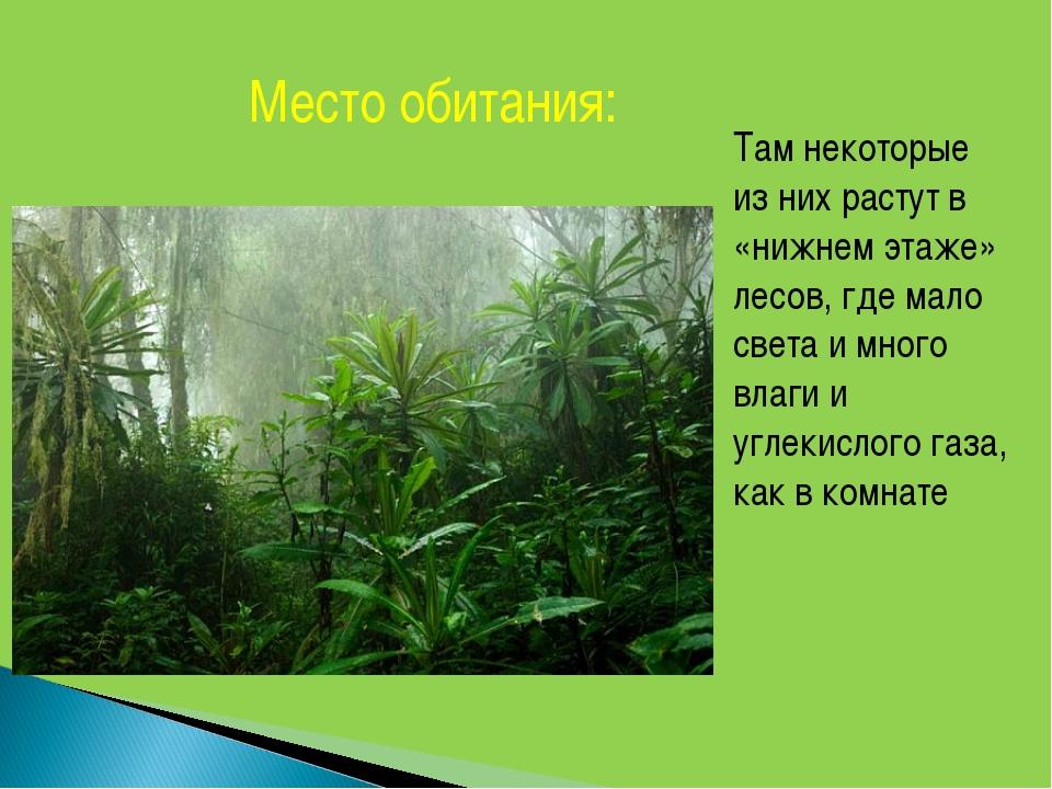 Место обитания: Там некоторые из них растут в «нижнем этаже» лесов, где мало...