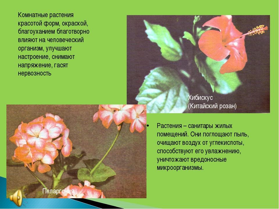 Комнатные растения красотой форм, окраской, благоуханием благотворно влияют н...
