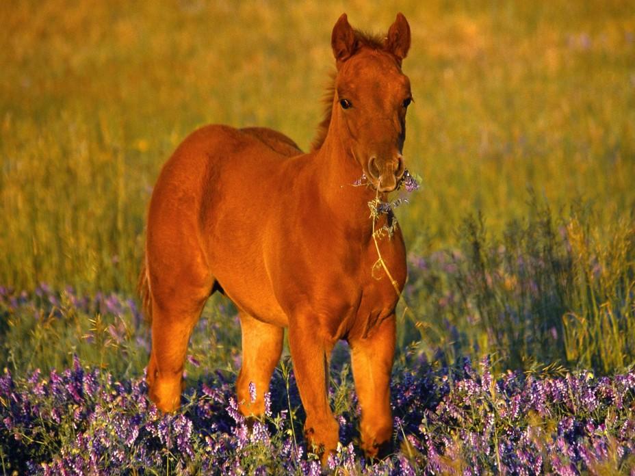 Фото животные, лошади, красота природы, грация животных
