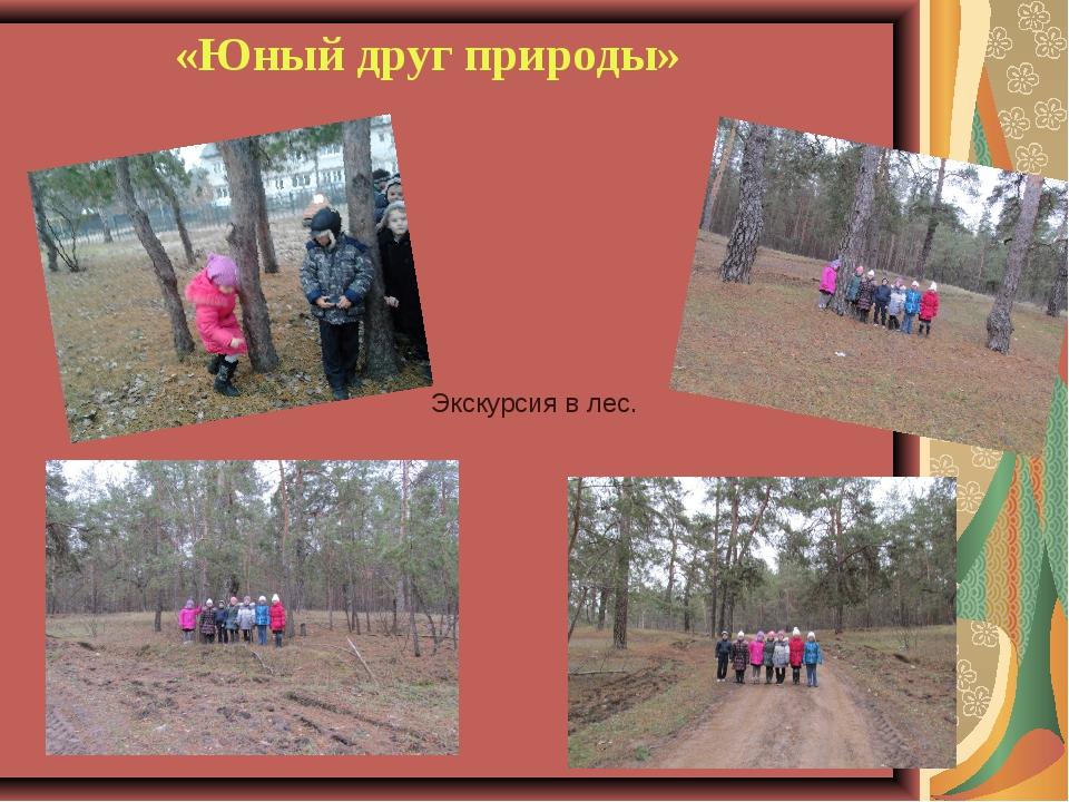 «Юный друг природы» Экскурсия в лес.
