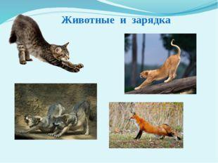 Животные и зарядка Почему человек в утренние часы, после сна, ведёт себя не т