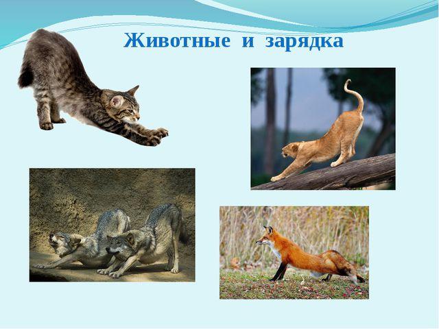 Животные и зарядка Почему человек в утренние часы, после сна, ведёт себя не т...
