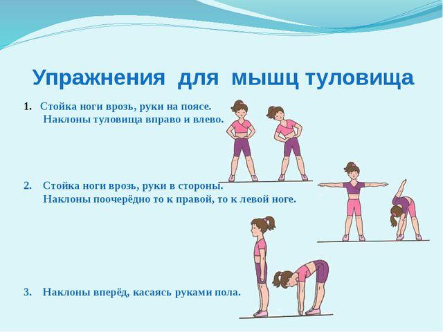 Упражнения для мышц туловища Стойка ноги врозь, руки на поясе. Наклоны тулови...