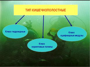 ТИП КИШЕЧНОПОЛОСТНЫЕ Класс гидроидные Класс коралловые полипы Класс сцифоидны