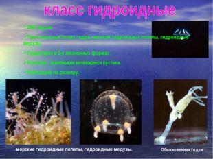 2800 видов Пресноводный полип гидра, морские гидроидные полипы, гидроидные ме