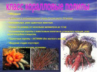 6000 видов в северных и дальневосточных морях России около 150 видов. колониа