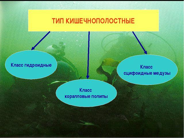 ТИП КИШЕЧНОПОЛОСТНЫЕ Класс гидроидные Класс коралловые полипы Класс сцифоидны...