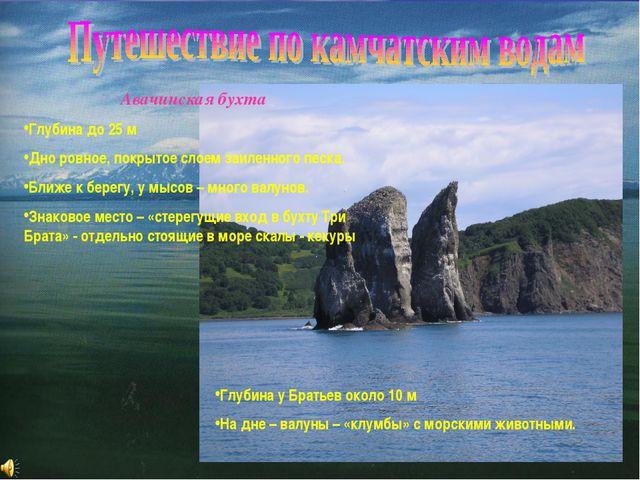 Авачинская бухта Глубина до 25 м Дно ровное, покрытое слоем заиленного песка....