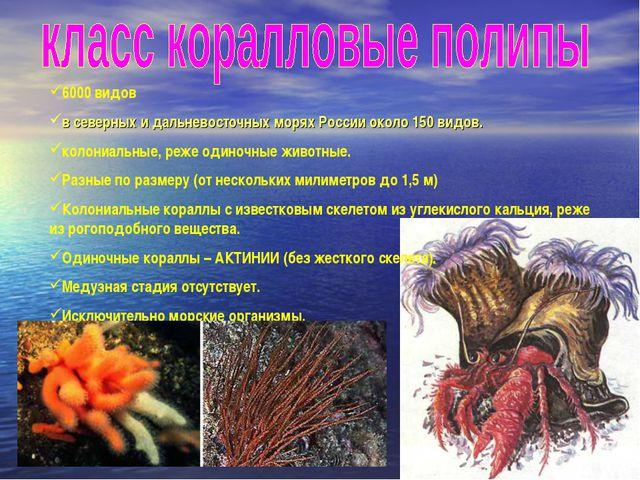 6000 видов в северных и дальневосточных морях России около 150 видов. колониа...