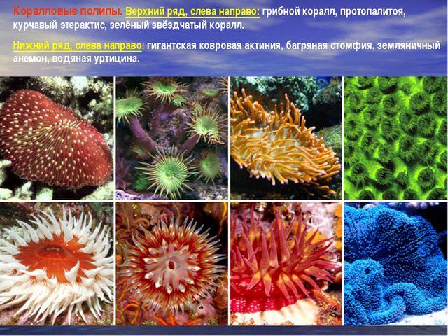 Коралловые полипы. Верхний ряд, слева направо: грибной коралл, протопалитоя,...