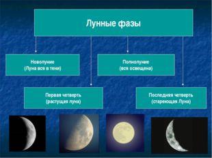 Лунные фазы Новолуние (Луна вся в тени) Первая четверть (растущая луна) Полно