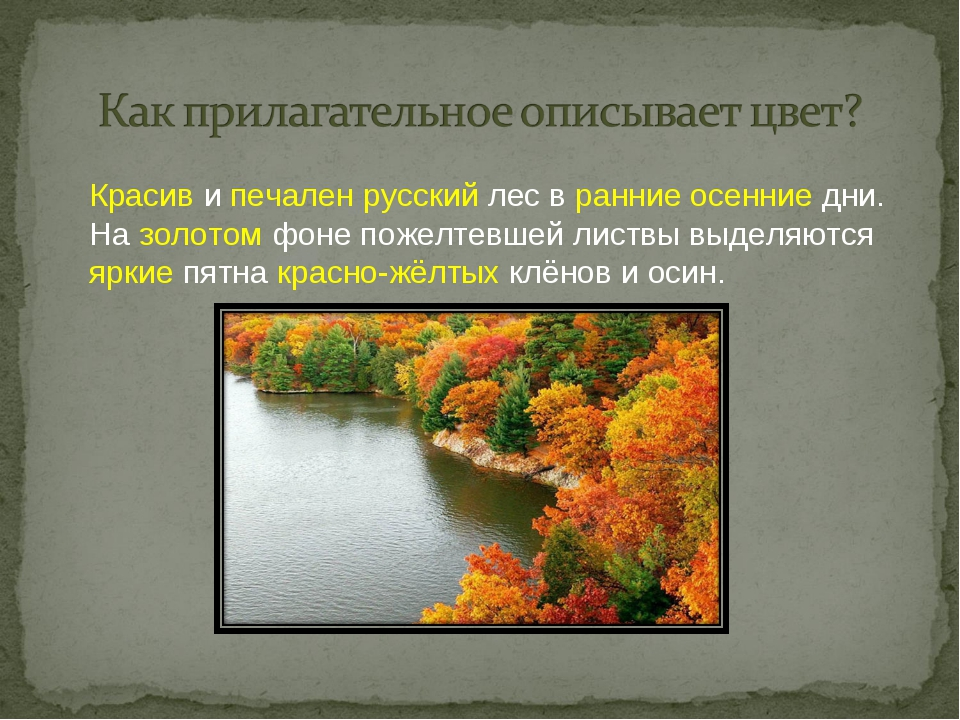 Красив и печален русский лес в ранние осенние дни. На золотом фоне пожелтевш...