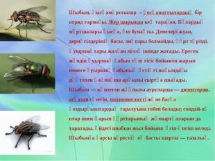 Шыбын,қысқамұрттылар –қосқанаттылардыңбір отряд тармағы.Жер шарындакең
