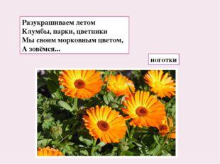 Разукрашиваем летом Клумбы, парки, цветники Мы своим морковным цветом, А зовё