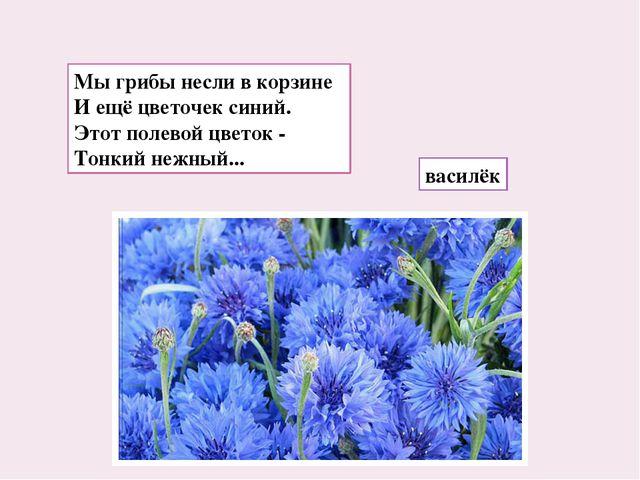 Мы грибы несли в корзине И ещё цветочек синий. Этот полевой цветок - Тонкий н...